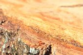 Background Macro Tree Stumps