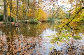 Autumn colors in forest with pond