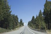 stock photo of mammoth  - Road through nature around Mammoth Lakes in California with trees on the board and no one around - JPG