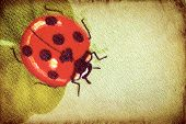Vintage ladybug on the clover leaf