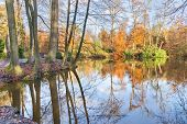 Forest in autumn with pond