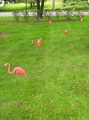 Flamingo-ed