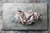 pic of pearl-oyster  - Five fresh raw Oysters on stone background with ice - JPG