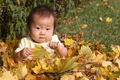 Cute Asian Baby In Pile Of Leaves