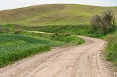 stock photo of dirt road  - Dirt road through fields of wheat Pullman Washington - JPG
