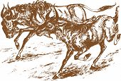 foto of antelope  - graphic animal illustration running african antelopes in savanna - JPG