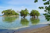 pic of tide  - Tree mangrove in the area of low tide - JPG