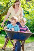picture of wheelbarrow  - Two little boy friends having fun in a wheelbarrow pushing by woman in domestic garden on warm sunny day - JPG