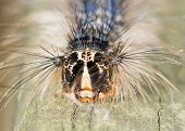 image of caterpillar  - A macro closeup of a Caterpillar perched on a wood plank - JPG
