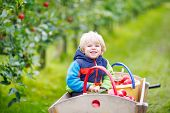 foto of trolley  - Adorable funny toddler boy sitting in wooden trolley with red apples and eating fruits - JPG