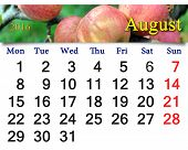 foto of august calendar  - beautiful calendar for August 2016 year with ripe apples on the branch - JPG
