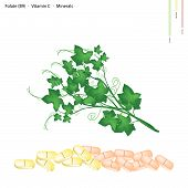 pic of christophene  - Healthcare Concept Illustration of Chayote Leaves or Sechium Edule Leaves with Folate B9 Vitamin C and Minerals Tablet Essential Nutrient for Life - JPG