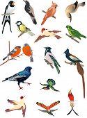 Ilustración con pájaros pequeños aislados sobre fondo blanco