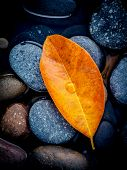 Autumn Season And Peaceful Concepts. Orange Leaves Falling On River Stone . Abstract Background Of A poster