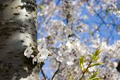 Tree Stam With Flowers