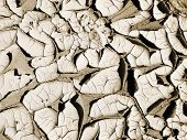 stock photo of loamy  - Sandy loamy desert soil drying up from the winter rains - JPG