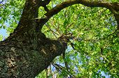 Place Under Big Tree