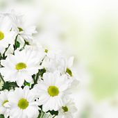 Light Floral Flower Border