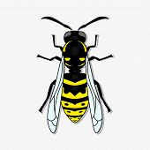 Yellow-black Wasp. A Stinging Insect, An Insect Pest. Flat Design. Vector Illustrator. Eps10 poster