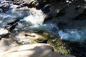 Allan River