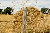 Hay Bale In Summer
