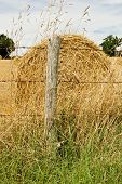 Hay Bale In A Summer Field