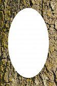 Tronco Closeup Frame e isolado Oval branca