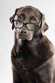 Choc Lab in Glasses