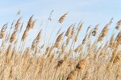 pic of wetland  - Wind bent reeds in a wetlands area - JPG