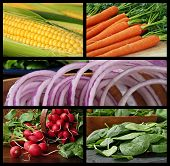 Colorful collage of fresh vegetables includes corn on the cob, carrots, red onions, radishes and spi