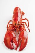 Raw Lobster Isolated