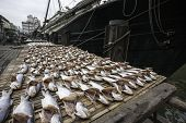 Dried sea fish on the pier in the port of Macau. China.