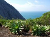 Bromeliads On Top Of The Mountain
