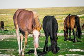 Young Horses Farm Animal Pastured On Green Valley Eating Fresh Grass Rural Landscape