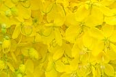 pic of vishu  - Cassia fistula flower background - JPG