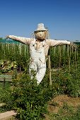 picture of scarecrow  - Jesolo  - JPG