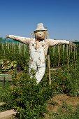 stock photo of scarecrow  - Jesolo  - JPG