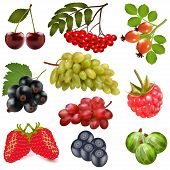 stock photo of rowan berry  - illustration of a set of ripe berries on a white background - JPG