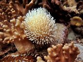 Little Soft Coral