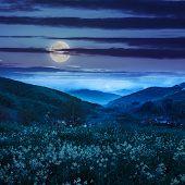 picture of moon-flower  - summer landscape - JPG