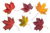 Autumn Leaves 1