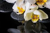 Beautiful Spa Setting Of White Orchid (phalaenopsis), Zen Stones With Drops And Reflection On Water