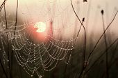 Rising sun in the cobweb