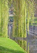 Foliage In Rotterdam, Netherlands