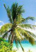 Serenity Shore Green Getaway