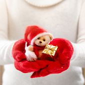 Female hands holding a cute teddy bear. Woman hands in red mittens showing a teddy bear gift dresses in knitted hat and scarf. Cute Christmas present. Winter holidays concept.