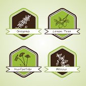 stock photo of oregano  - Set of Natural Organic Product badges - JPG