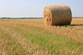 Grass on field over village field