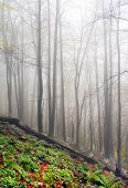 Autumn foggy forest landscape