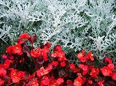 Flowers in Mirabell Gardens in Salzburg, Austria, Europe